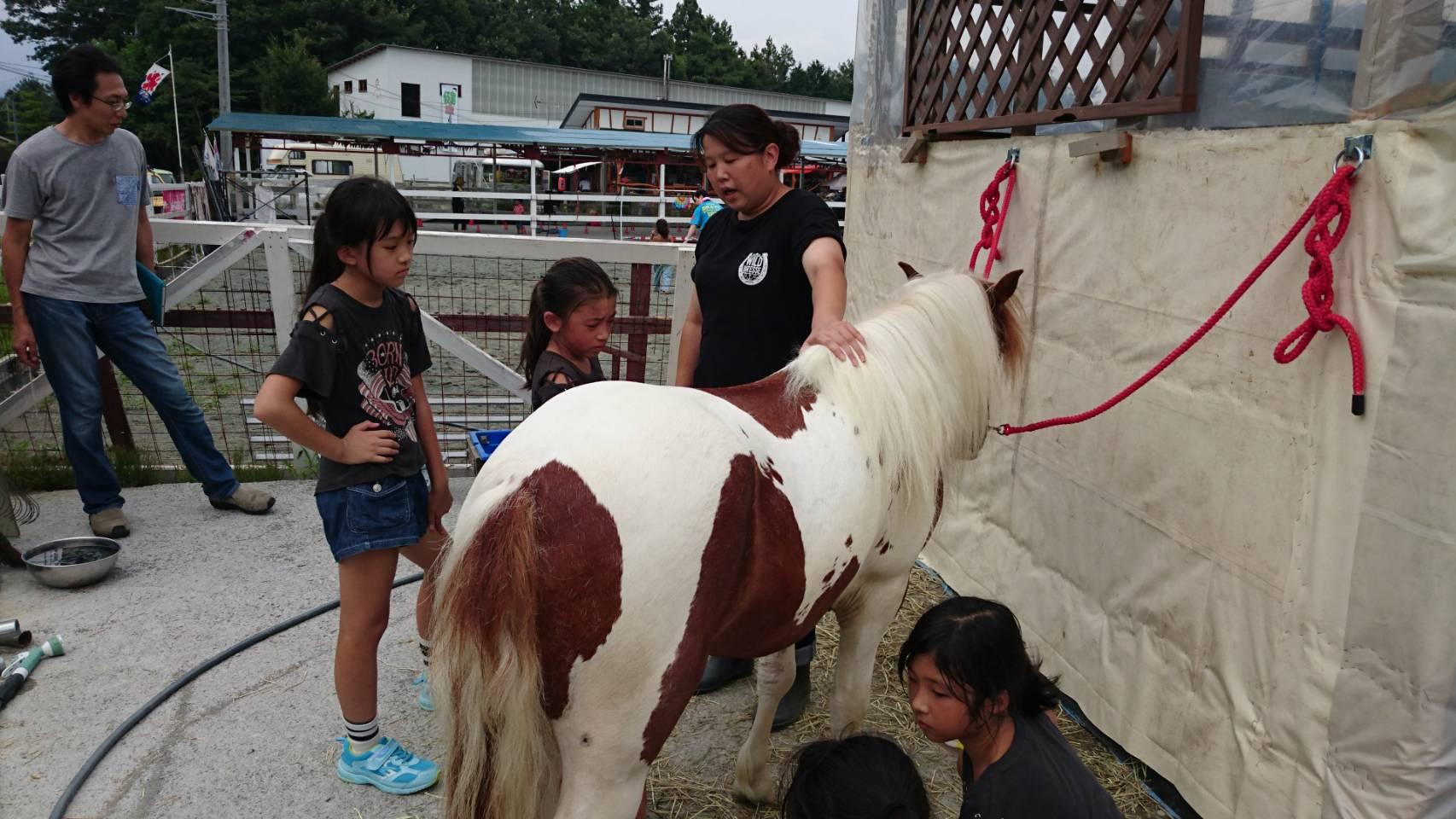Pony Jack